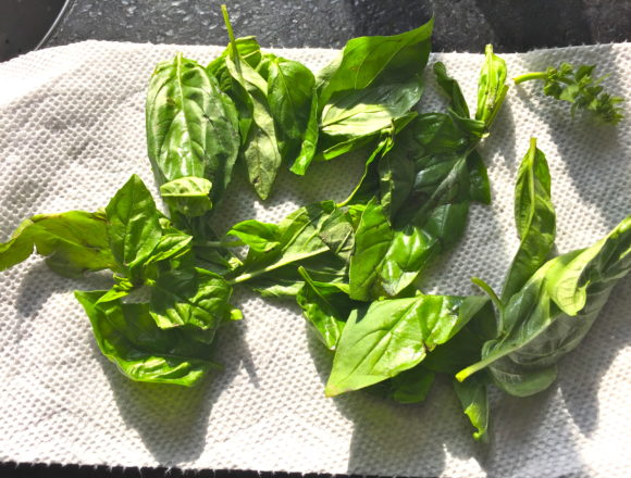 two dozen basil leaves